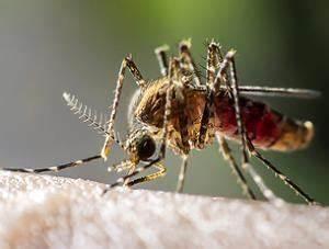 Hausmittel Gegen Mückenstiche : was hilft gegen m ckenstiche mittel hausmittel vorgestellt ~ Watch28wear.com Haus und Dekorationen