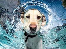 Hunde unter Wasser für Kinder [GEOLINO]