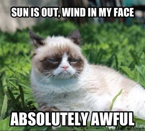 Top 40 Funny Grumpy Cat Pictures And Quotes  Quotes And Humor