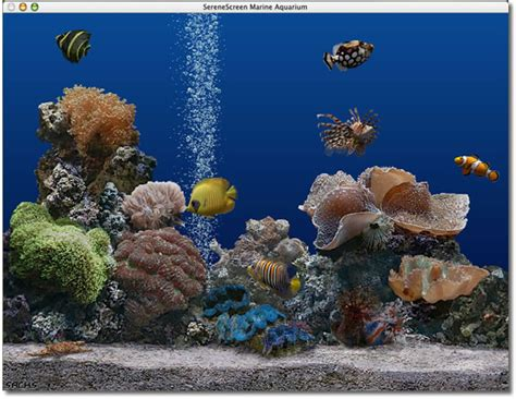 bureau virtuel mac serenescreen marine aquarium mac