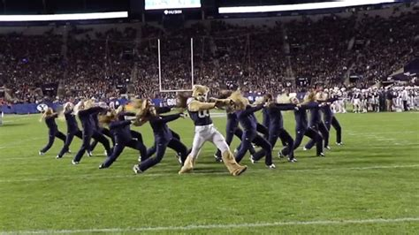 byu mascot cosmo cougar   cougarettes throw   incredible dance routine buzzfeed