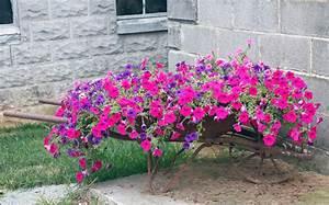 Petunien Samen Kaufen : petunien pflanzen sortiment rosen petunien 6 pflanzen von ~ Michelbontemps.com Haus und Dekorationen