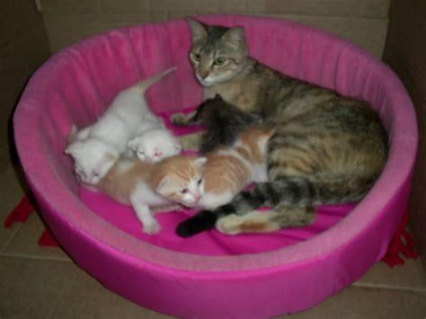 hermosas imagenes  descargar de gatitos  sus crias