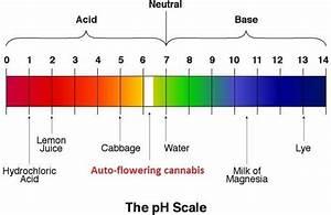 Don Du Sang Cannabis : the perfect ph value for a cannabis plant ~ Medecine-chirurgie-esthetiques.com Avis de Voitures