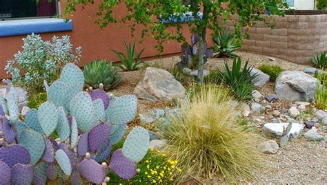 backyard outdoor kitchen desert gardening in sync with the seasons