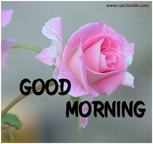 Good Morning Wishes With Flowers Pictures, Images - Page 66
