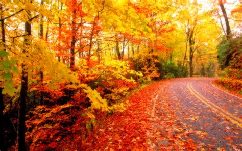 Beautiful Autumn Wallpapers by All New Wallpaper The Beautiful Autumn Wallpaper For