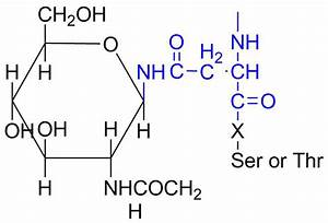 Oligosaccharide - Wikipedia