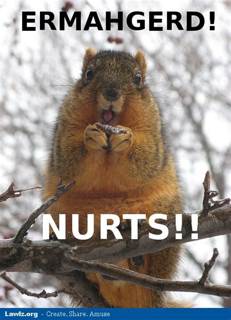 Squirrel Memes - monday memes squirrels nepa blogcon