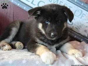 german-shepherd-husky-mix-blue-eye | Cool kid | Pinterest ...