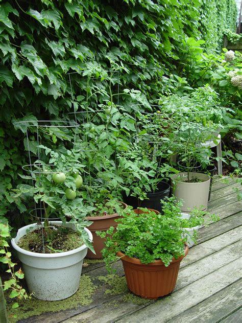 garden housecalls veggie gardening   garden