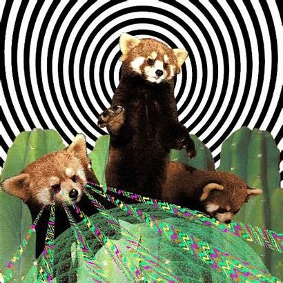 Psychedelic Gifs Dream Indie Pop Theme Animated
