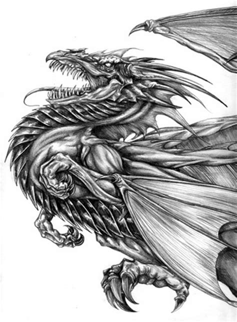 cool dragon drawings  inspiration hative