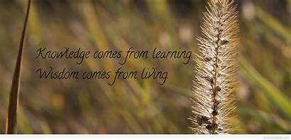 Knowledge Quote Wisdom Learning Amazing Comes
