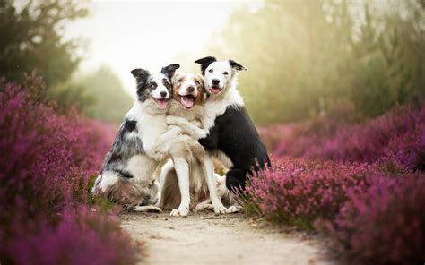 Pet Animals Wallpapers - friends flowers mist animals nature pet