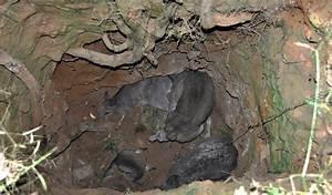 Stranded kangaroos highlight mine dangers - Australian ...