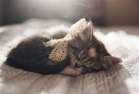 sleeping kitty pictures   images  facebook