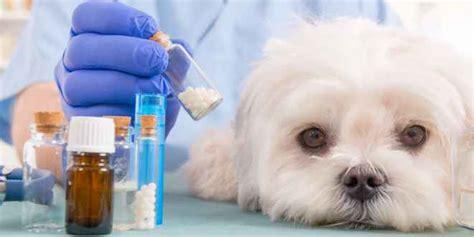 epilepsie beim hund tiermedizin dr gumpert