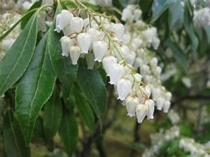 Weiß Blühende Stauden : wei bl hende stauden verleihen dem garten einen raffinierten look spring garden grow ~ Watch28wear.com Haus und Dekorationen
