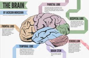 similiar parts of the brain and their functions keywords, Human Body