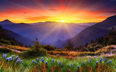 sunrise  zeland mountain field flowers wallpaper hd