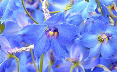 blaue blumen frühling floristik verkauf und lieferservice blumen olli berlin familientradition seit 40 jahren