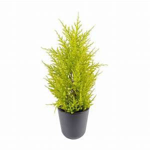 Mini Plante Artificielle : cypres artificiel mini jaune vert 55 cm juniperus cypr s artificiels reflets nature lyon ~ Teatrodelosmanantiales.com Idées de Décoration