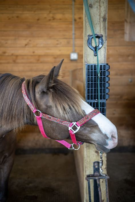 scratcher angle right scratching horse equine vet recommended