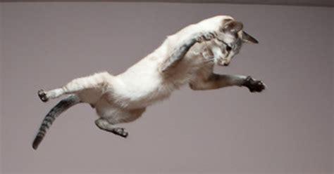 katze an neue besitzer gewöhnen wie kann ich katzen vertreiben katzen aus dem garten