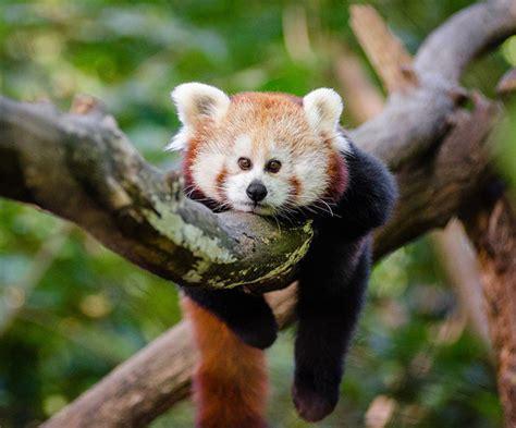 17 jautras bildes, kā izskatītos dzīvnieki ar acīm priekšā ...