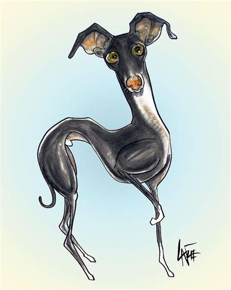 foto de Italian Greyhound #1 Drawing Italian Greyhound #1 Fine