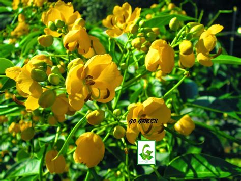 seeds for sale easy to spot grow flower seeds for sale