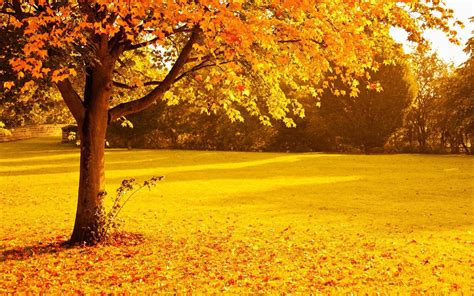 Orange Fall Wallpaper by Autumn Trees Wallpapers Wallpaper Cave