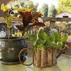 Zimmerpflanzen Pflege Tipps : zimmerpflanzen auf dem balkon tipps f r zimmerpflanzen ~ Lizthompson.info Haus und Dekorationen