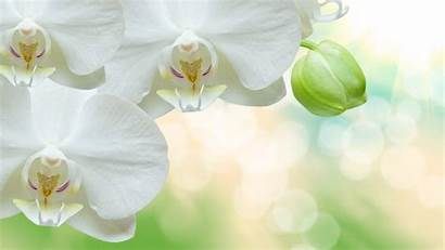 Orchid Wallpapers Ultrahd Android 4k Backiee Tens
