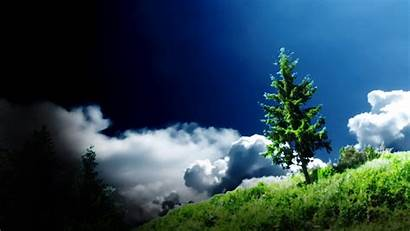 Tree Wallpapers Background Backgrounds Themes Px Advertisement