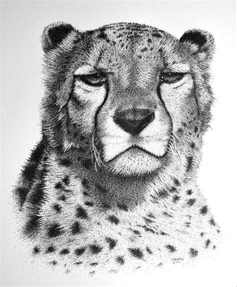 cheetah pointillism   ink paul brady flickr