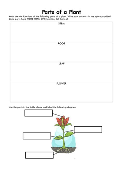 parts of a plant by marcocalleja teaching resources tes