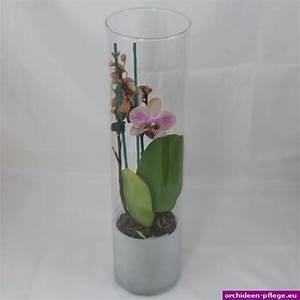 Orchideen Im Glas Dekorieren : orchidee im glas free download ausmalbilder ~ Watch28wear.com Haus und Dekorationen
