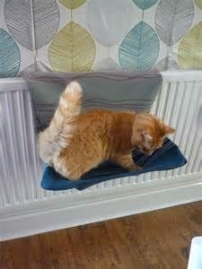 cat bed diy diy and crafts cats and diy