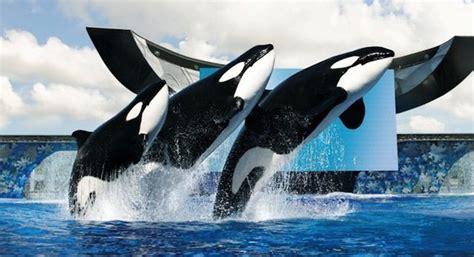 days  shamu  whale day