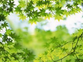 background hijau daun ijpg partners  travel