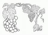 Grapes Coloring Pages Printable Grape Vine Colouring Grapevine Colored sketch template