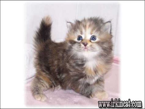 In My Area by Kittens For Free In My Area Irkincat