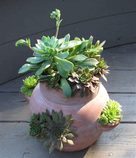 succulent garden ideas for indoors and outdoors room