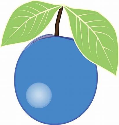 Blueberry Clipart Clip Plum Transparent Berry Cartoon