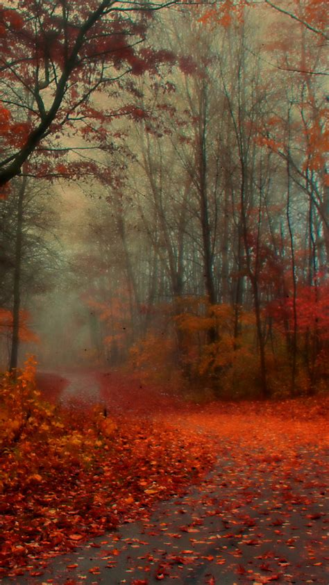 Autumn Themed Wallpapers For Android by For Samsung Galaxy I9596 Hd Windows Wallpapers