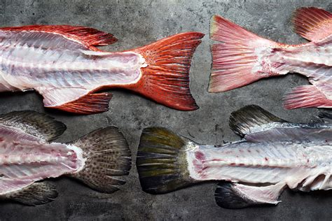 fish bones fresh types seafood