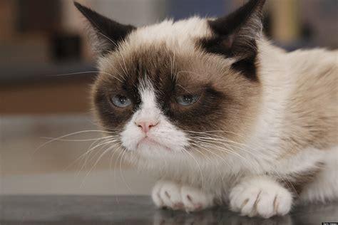 Grumpy Cat Movie Popular Internet Meme Inks Hollywood