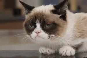 Grumpy Cat Movie: Popular Internet Meme Inks Hollywood ...